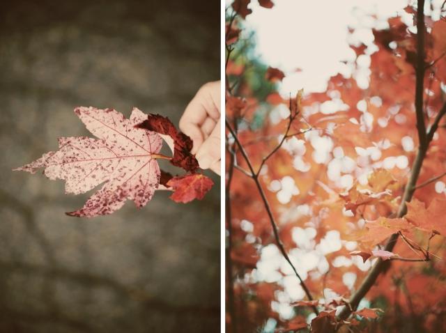 leavesdip